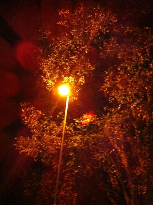 20120920-150553.jpg