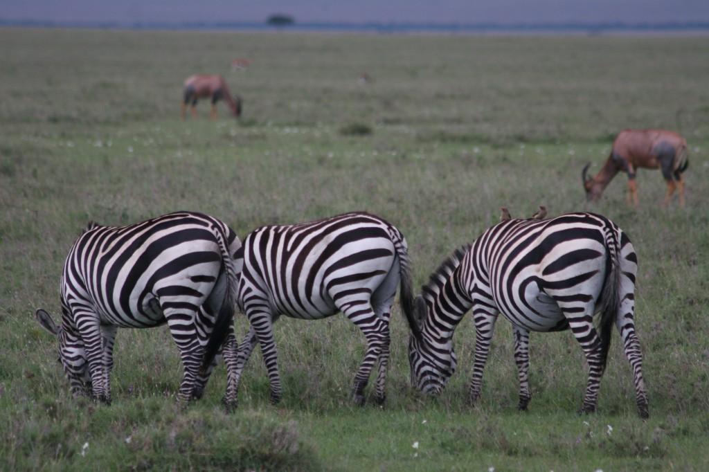 Nairobi National Park 2009